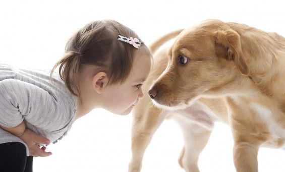 Toddler Girl looking at her dog's nose