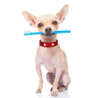 img_diferentes_formas_de_limpiar_los_dientes_a_un_perro_2200_600