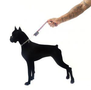 boxerdog
