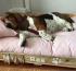 camas para perros cunas para perros
