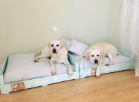 camas para perros cama para golden