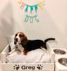 camas de perros, camas para perros